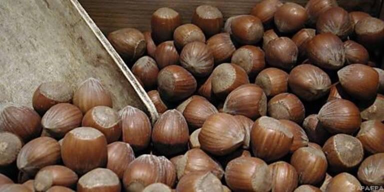 Haselnüsse: Billigprodukte mit Aflatoxin belastet