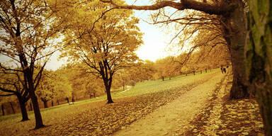 Herbst: Frische Luft ist beste Medizin