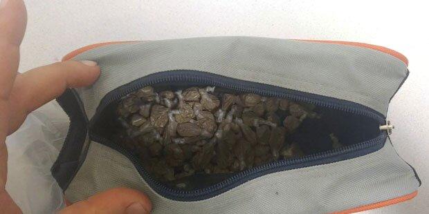 Wien: Drogendealer mit 51 (!) Kugeln im Mund erwischt
