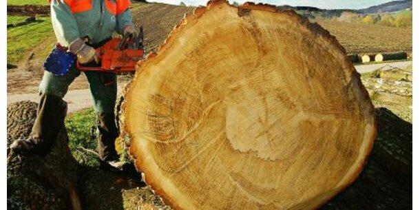Holzunternehmen Häupl mit 73 Mio. Euro in Konkurs