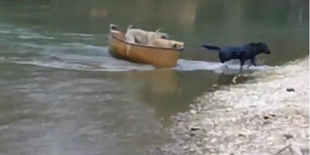 Labrador rettet zwei Hunde mitsamt Boot