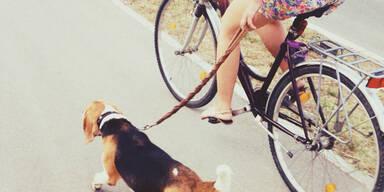 Hund Radfahren