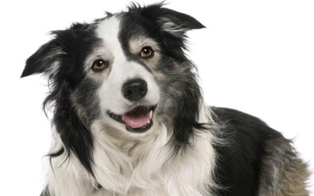 Diabetes-Hund riecht Blutzuckerwerte