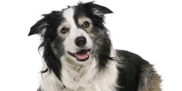 Hunde diabetes riechen