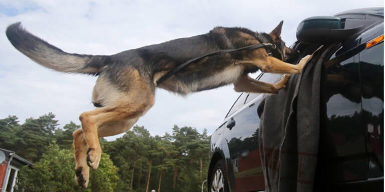 Polizeihund erschnüffelte zwei Einbrecher