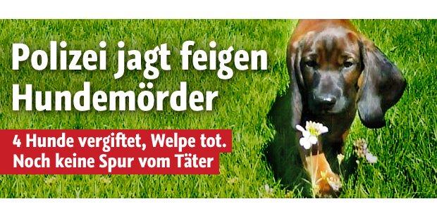 Polizei jagt feigen Hundemörder