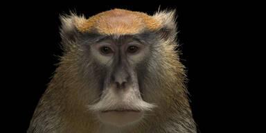 13 Affen verbrennen in Safari-Park