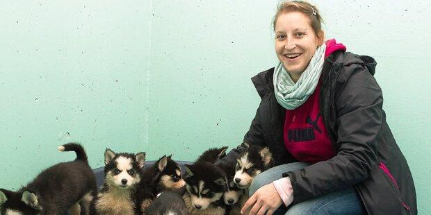Hundehandel mit acht Husky-Welpen vereitelt