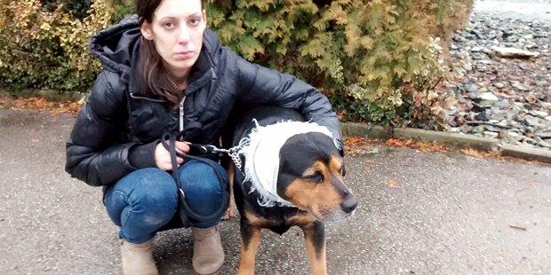 Diensthund zerfetzt Mischlings-Rüden