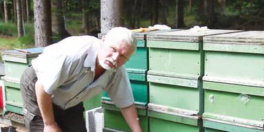 Giftanschlag: 1 Million Bienen tot