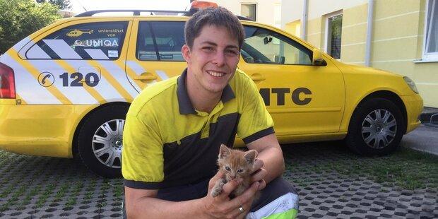 Kätzchen von Pannenhelfer aus Motorraum befreit