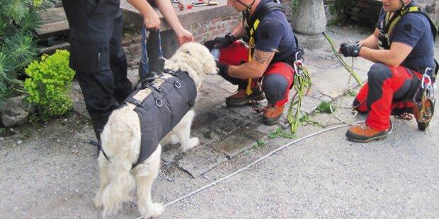 Waisen-Hund aus Bergnot gerettet