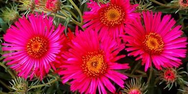 Im Mai kommen Blumen in den Garten