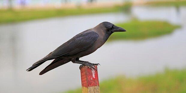 Kärnten plant Massaker an 20.000 Vögeln