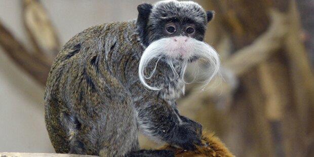 Zoo Schönbrunn hat einen neuen Kaiser