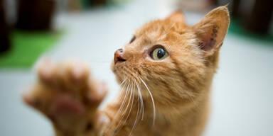 Frau wurde blind, weil Katze sie ableckte