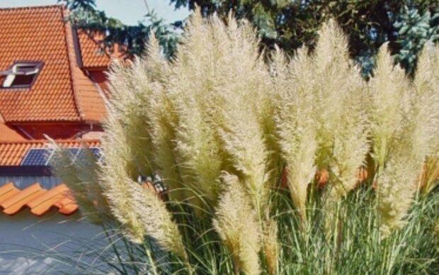 Winterschutz für Nässe-empfindliche Pflanzen