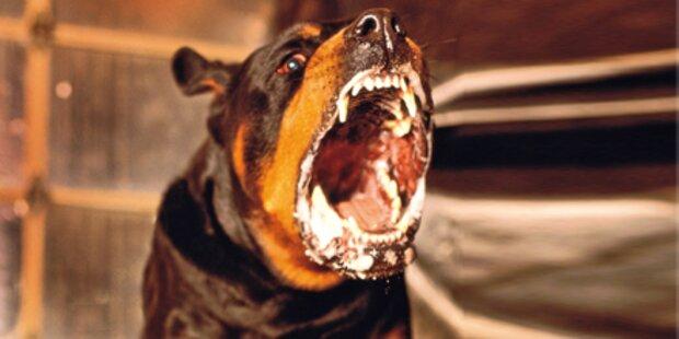 Hund fällt Vierbeiner und  Besitzerin an