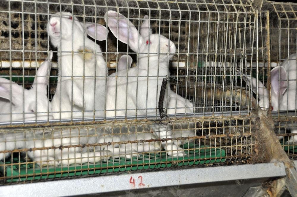 Kaninchen - Unsere Tiere - Sendung 15092019 - Pyrogene-Test