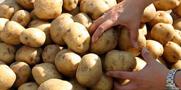 Kartoffeln in Russland teurer als Bananen