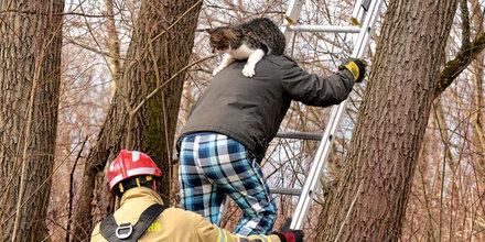 Nach Kamin-Absturz saß Kater im Baum fest