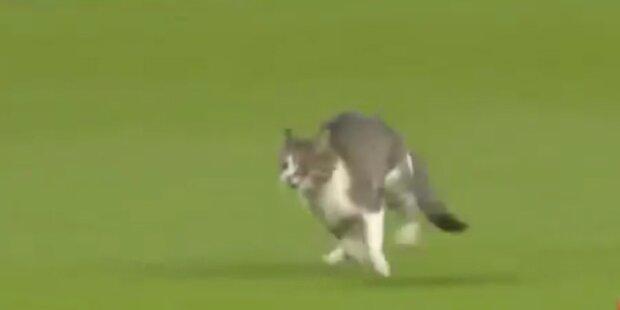 Ballverliebt: Katze stürmt Fußballspiel