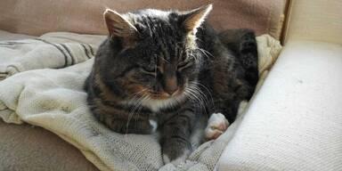 Katze Leli kehrt nach Hause zurück