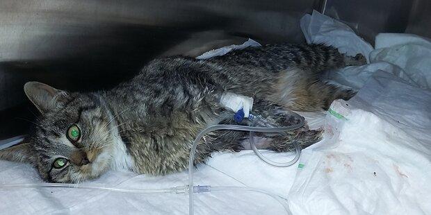 Grausame Tierquälerei in Grödig
