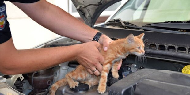 Schwierige Rettungsaktion: Katze aus Motorraum befreit