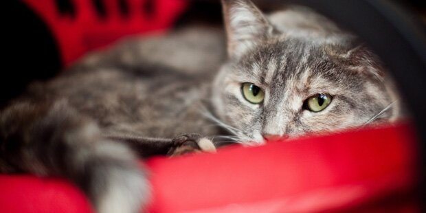 Katze geriet in Schlageisen: Pfote fast ab