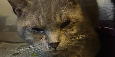 Über 100 verwesende Katzenkadaver entdeckt