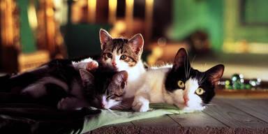 Homöopathie für kranke Katzen