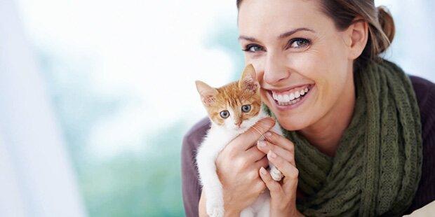 Streit um Katzensteuer in Deutschland