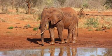 Kenia TsavoNP Roter Elefant