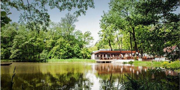 Klee am Hanslteich im Wienerwald