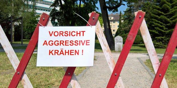 Krähen-Alarm im Linzer Krankenhauspark