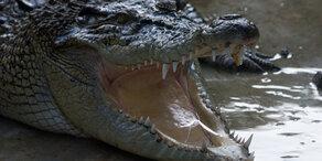 Krokodil springt Forscherin an und zerfleischt sie