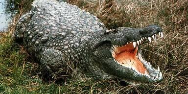 Krokodil reißt 9-Jährigen mit sich in die Tiefe
