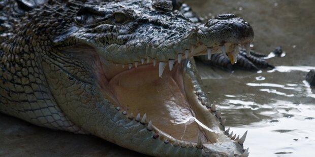 Frau vermutlich von Krokodil getötet