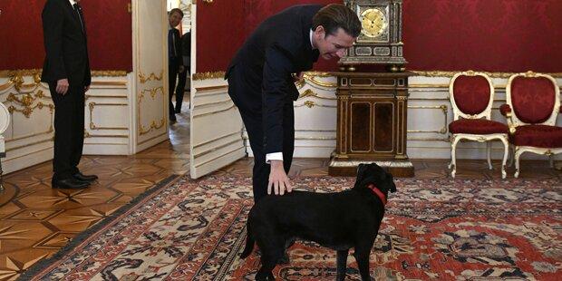 Kurz bei VdB: Hund Kita sorgt für Lacher