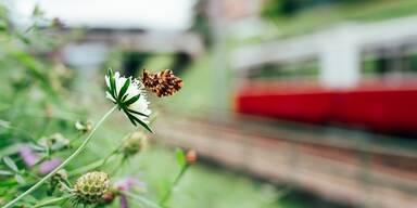 Schmetterling neben Zuggeleisen