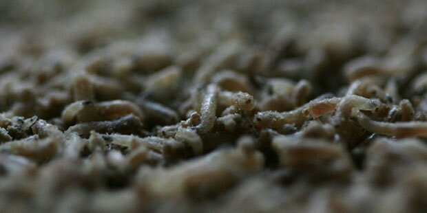 Ekel-Alarm: Schüler bekamen Suppe mit Motten