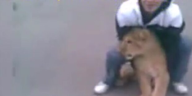 Schüler bringen Löwenbaby in Schule