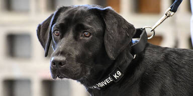 Lulu ist arbeitslos: CIA feuert Hund