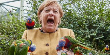 Kanzlerin Merkel von Papagei gebissen