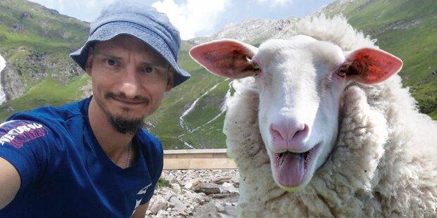 Wanderer von 'Amok-Schaf' attackiert