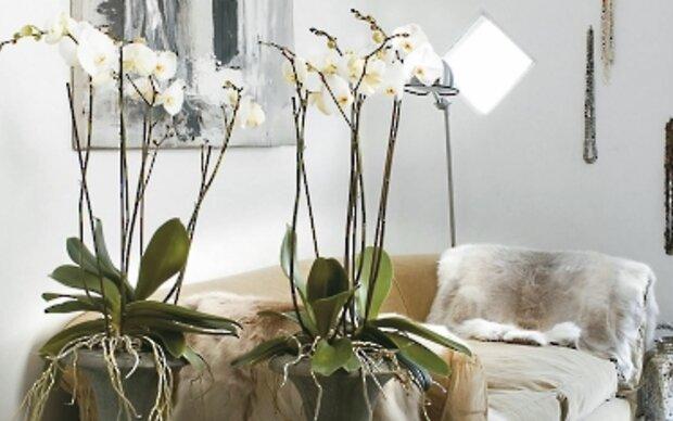 Wie Orchideen und Bromelien Wasser speichern