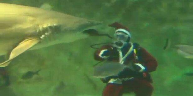 Mutig: Weihnachtsmann taucht mit Haifischen