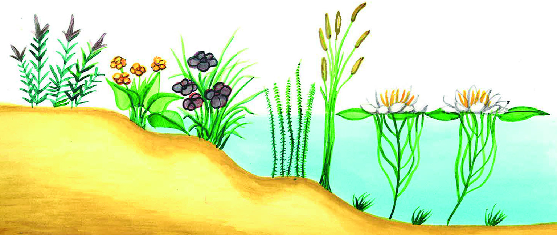 Garten - Garten-CH - Gartenanlage - Teich - Pflanzenstruktur