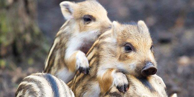 Teenies quälten Tier-Baby zu Tode